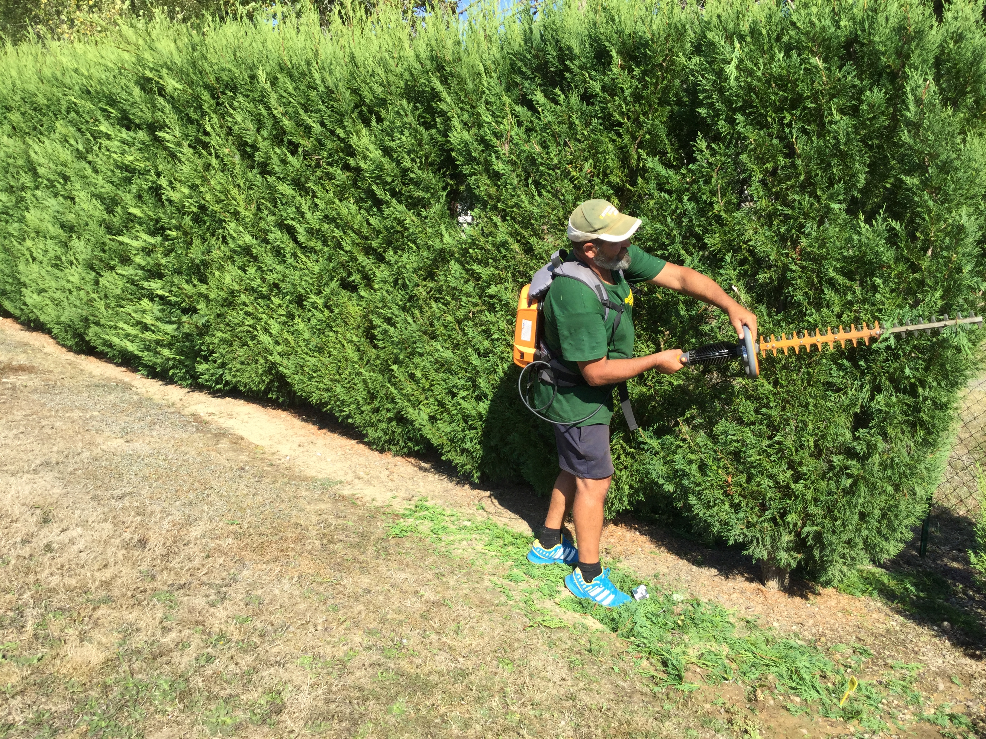 taille Entretien Service Jardin